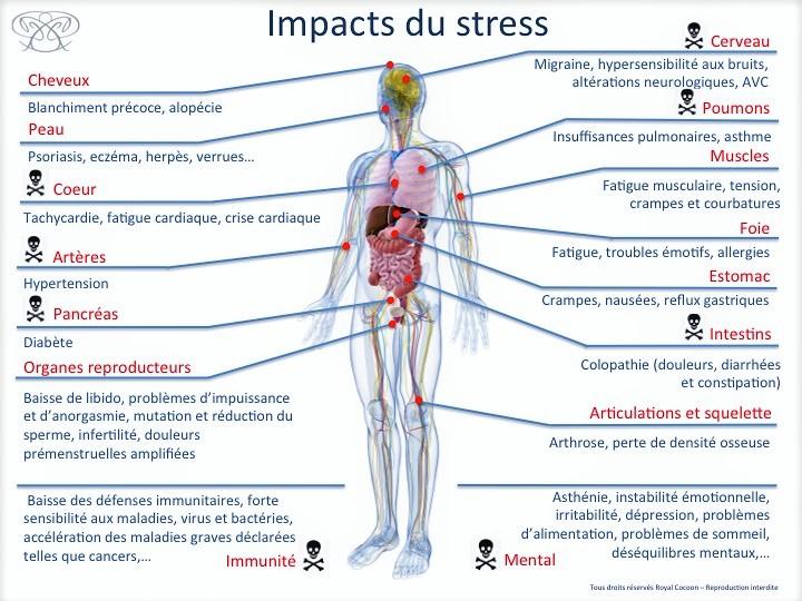 Impacts du stress